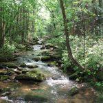 Laurel Fork Falls (A5) to Canebrake (A6)